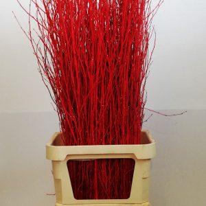 betulla glitter rosso